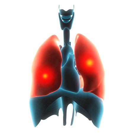 nasal: lungs organ pain  3d illustration Stock Photo