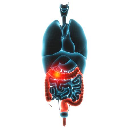angularis: guts organ pain 3d illustration