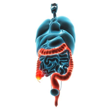 gastroparesis: guts organ pain 3d illustration