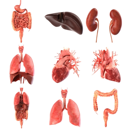 Its part of a big set of organ illustrations include pain, desease etc. 3d rendering Stock Photo