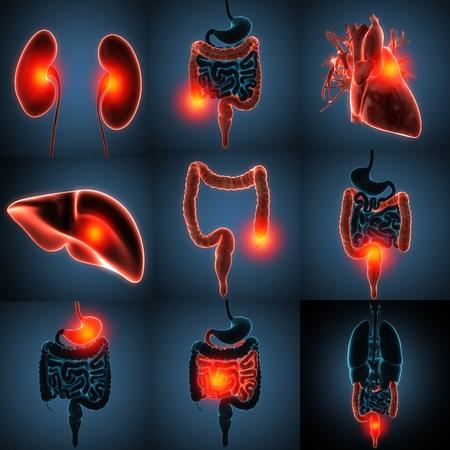 anatomisch nauwkeurige 3D-weergave van menselijke organen