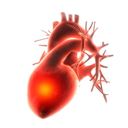 ventricle: heart organ pain