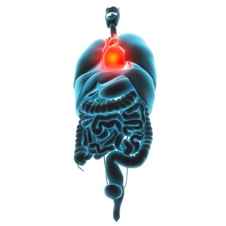 heart organ pain