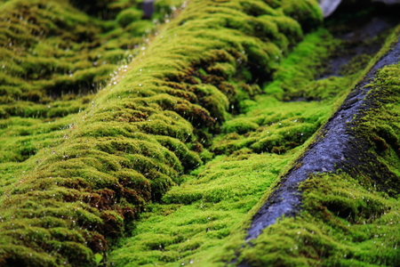 mosses: droplet of mosses Stock Photo