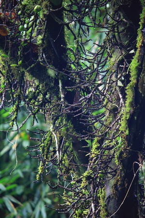 mosses: Commensalism of tree and mosses