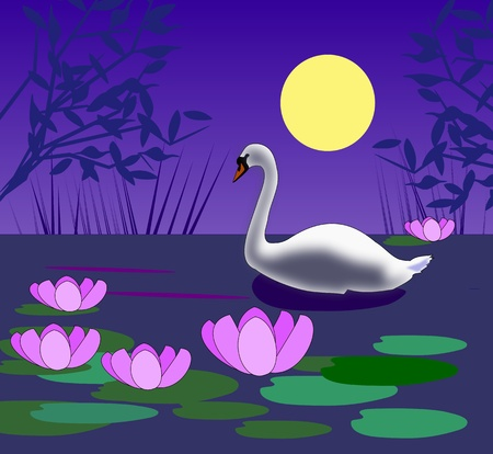 A white swan swimming on the   water in the moonlight. photo