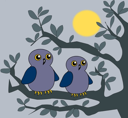 Two owls sitting together on a branch in the moonlight. photo