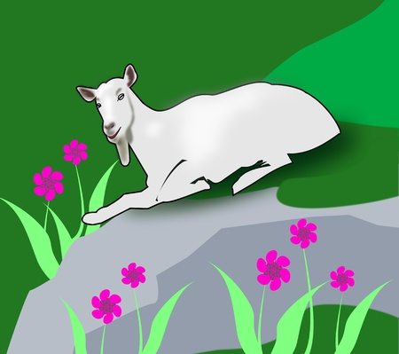 A goat rests on a rock in a   grassy slope where it grows   flowers. photo