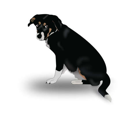 watchdog: A black brown and white dog.