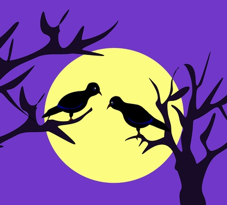 Two black birds sitting in the moonlight photo