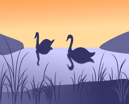 Two swans swimming on the lake in the sunset  Stock Photo