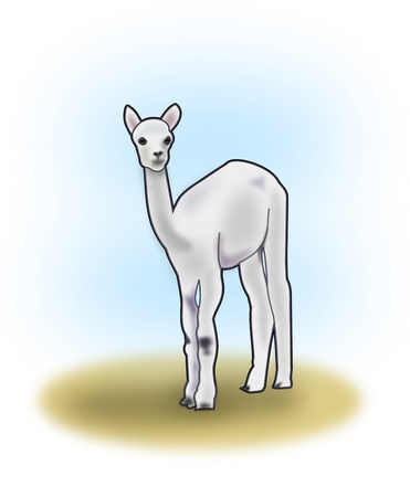 outward: A cute llama standing and looking   outward.