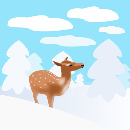 A deer that stand between snow covered spruce trees.  photo