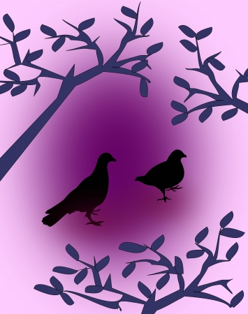 Silhouette of two black pigeon   between branches of trees. photo