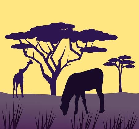 graze: African animals graze on the savannah in the sunset