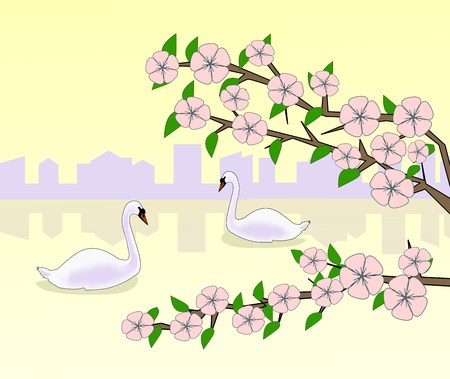 flowering: Flowering branches against a background of sunset and the silhouette of a city and two swans swimming in a lake.