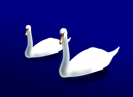swans: Two swans swimming in a blue lake or river.