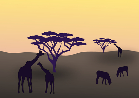 graze: African animals graze on the savannah in the sunset. Stock Photo