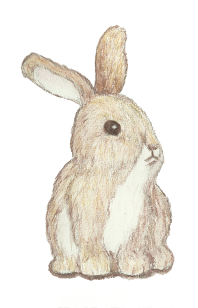 brown hare: A little bunny drawn with water color pencils over a white background.