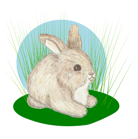 lying in: One little bunny lying  in tall grass.