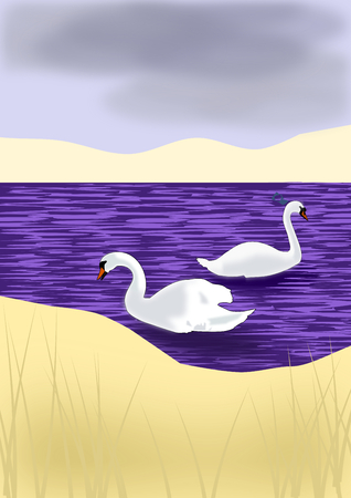 Two white swans swimming in a blue sea. Stock Photo