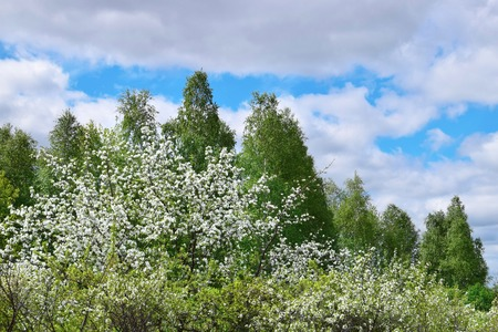 Green tree and blue sky with clouds nature