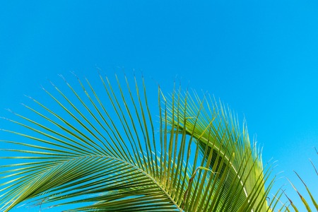 Green exotic leaf of palm in bottom with blue sky background Stock Photo