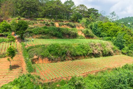 Several plantation levels on the hill on a farm