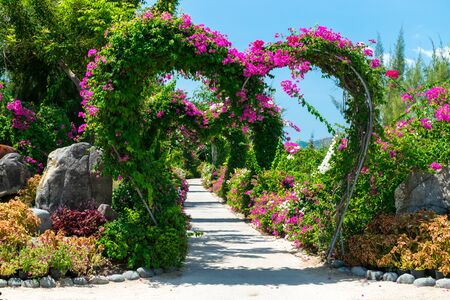Heart-shaped arch with pink flowers in park in the tropics under sunlight