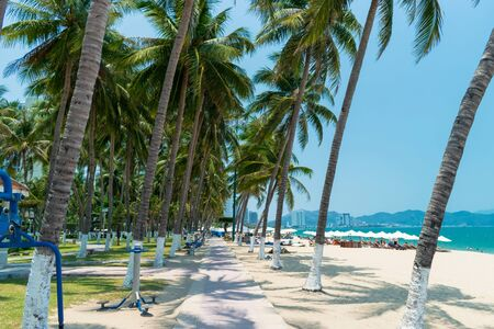 Tall palm trees on sandy shore in the tropics and a road in the park Foto de archivo