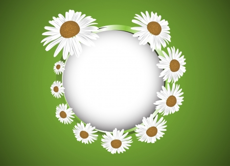Background with daisies flowers  Clip-art Vector