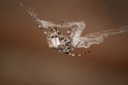 Big spider on the net Stock Photo