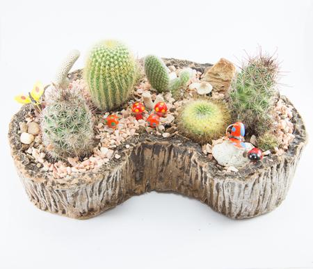small garden: cactus in small garden Stock Photo