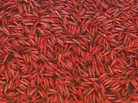 pileup: red bowl Stock Photo