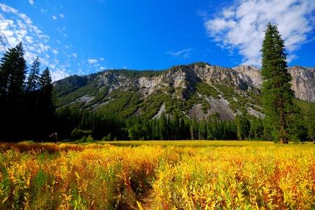 Yosemite Fields Stock Photo