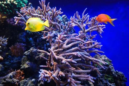 underwater fish Stock Photo