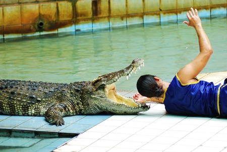 A man fight with the crocodile in the zoo