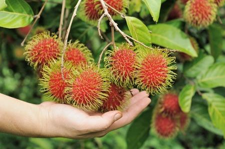 rambutan: Details of Rambutan fruit background