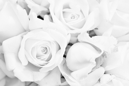 black and white rose background