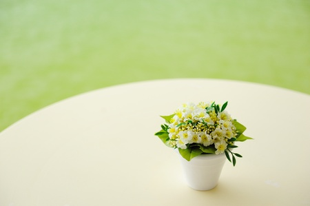 century plant: Vintage retro flower on the table in green background Stock Photo