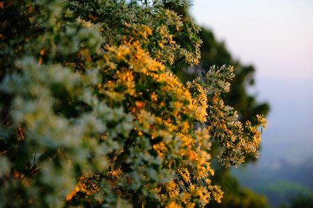flowers on sunrise. Composition of nature photo