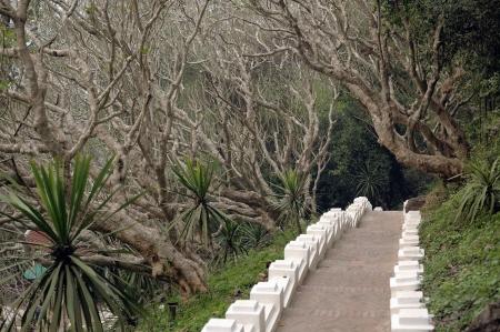 elevated walkway: tree path the walkway
