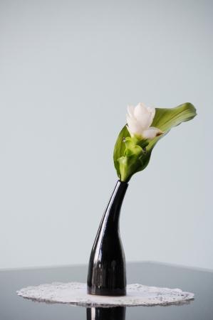 plantlife: still flower shot