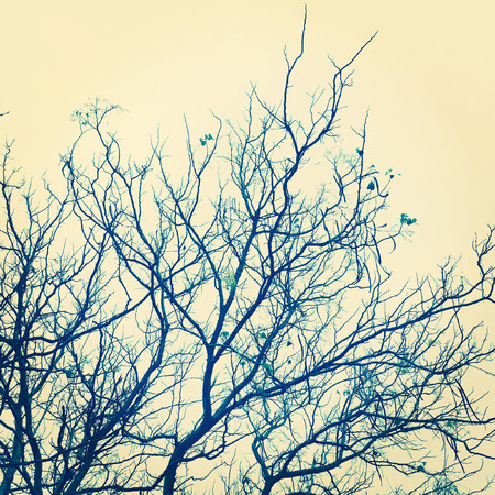 moody sky: Tree art branch vintage style