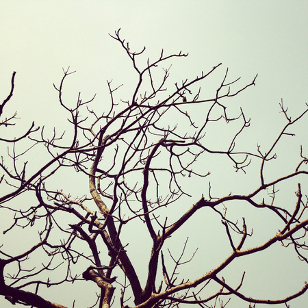 tree branch art vintage