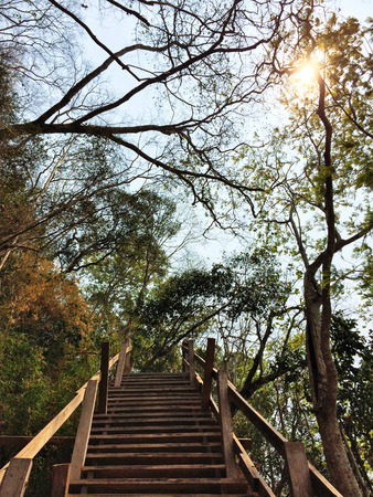 stairway going up to the forest and sky