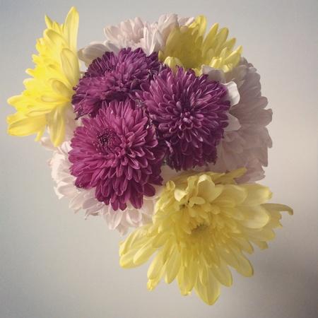 Flower pot show