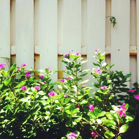 Fresh summer garden