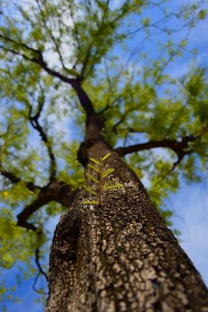 growing leaf on the tree