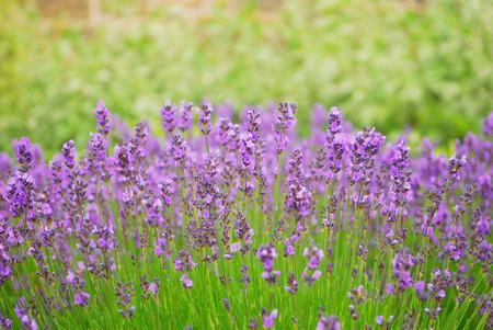Purple flower focus background textured